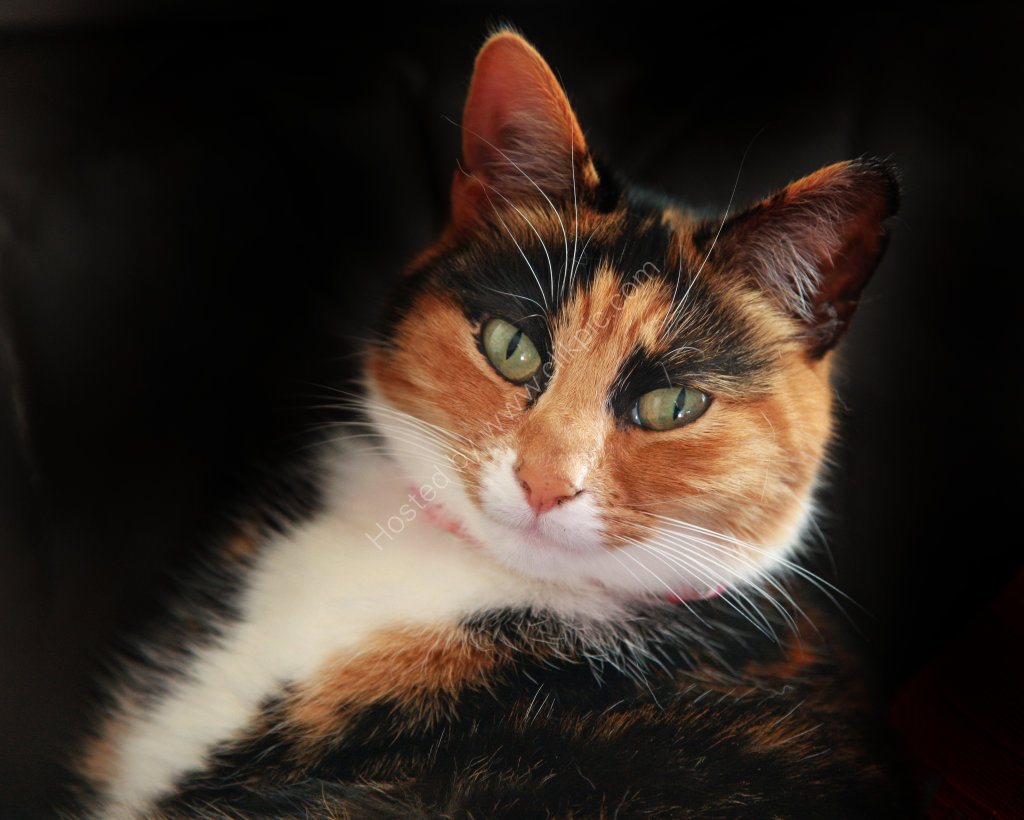 One of our cats Molly. A real cutie.
