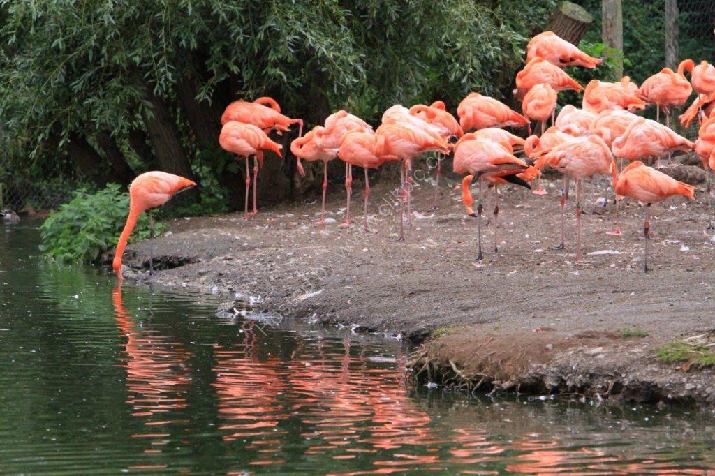 Flamingo Time