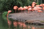 Flamingo Time