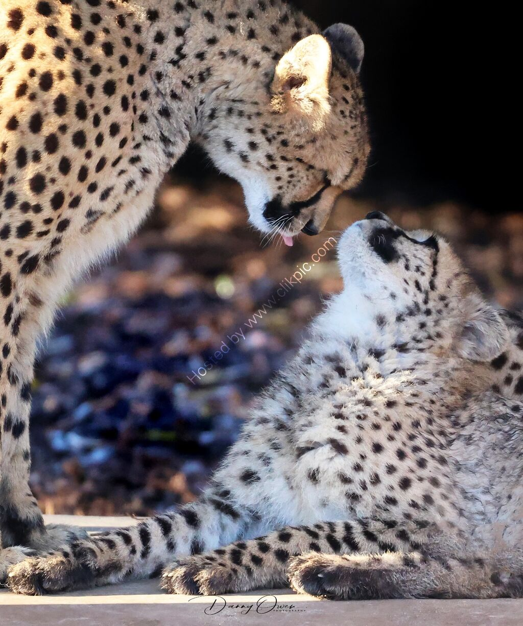 MUM AND ONE OF HER CUBS