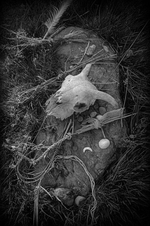 SHEEP SCULL AND WEAVE - 2010