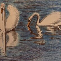 """Swans on Otterston Loch"" by Jan Callender"