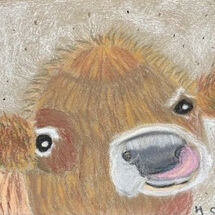 """Highland Calf"" by Hazel Campbell"