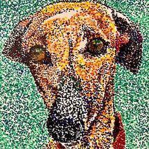 """Buddy the Whippet"" by Moira MacPherson"