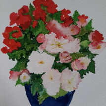 """""""Begonias from my garden"""" by Judith Jaggard"""