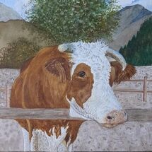 """Hereford Cow"" by Judith Jaggard"