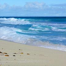 Beachseaweed