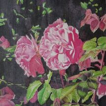 """""""Pink Roses' by Adrian Masson"""