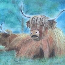 """Highland Coos"" by Gwynith Young"
