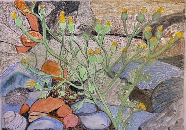 """Rocks, Shells and Plant Life at Dysart"" by Jan Callender"
