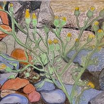 """Rocks, Shells and Plant Life at Dysart"" by Jan Callender"