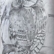 """Owl"" by Maggie Brown"