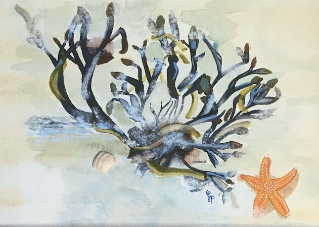 """""""Coastal Life with Orange Starfish"""" by Gabi Piche-Paterson"""