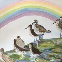 "Rainbow Shanks practicing Social Distancing. inspired by ""After the storm there is a Rainbow"""