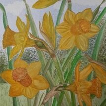 """Daffodils in the garden"" by Judith Jaggard"