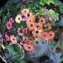Flowers - Photograph using Fish-Eye Lens