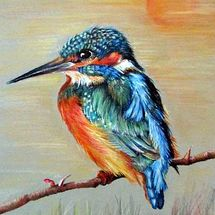 Mr Kingfisher