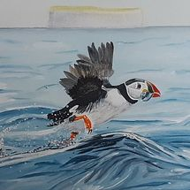 Joint 3rd Place - 'Puffin taking off'', by Gabi Piche Paterson