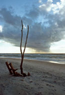 Driftwood on beach at Ahrenshoop.