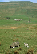 In the Yorkshire Dales.