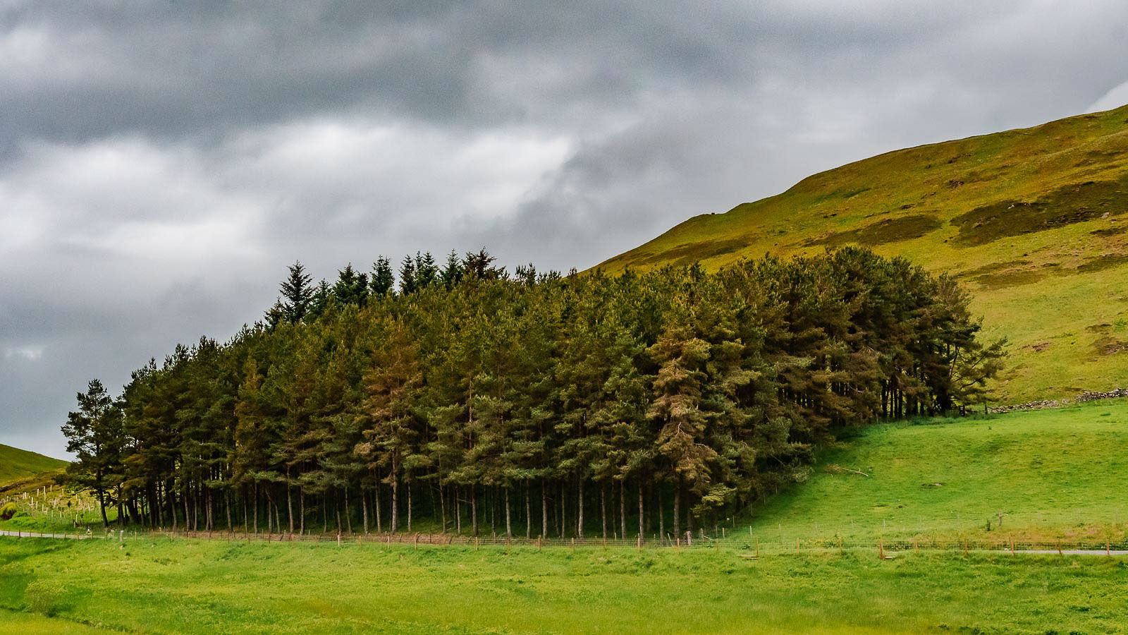 Small forest Scotland