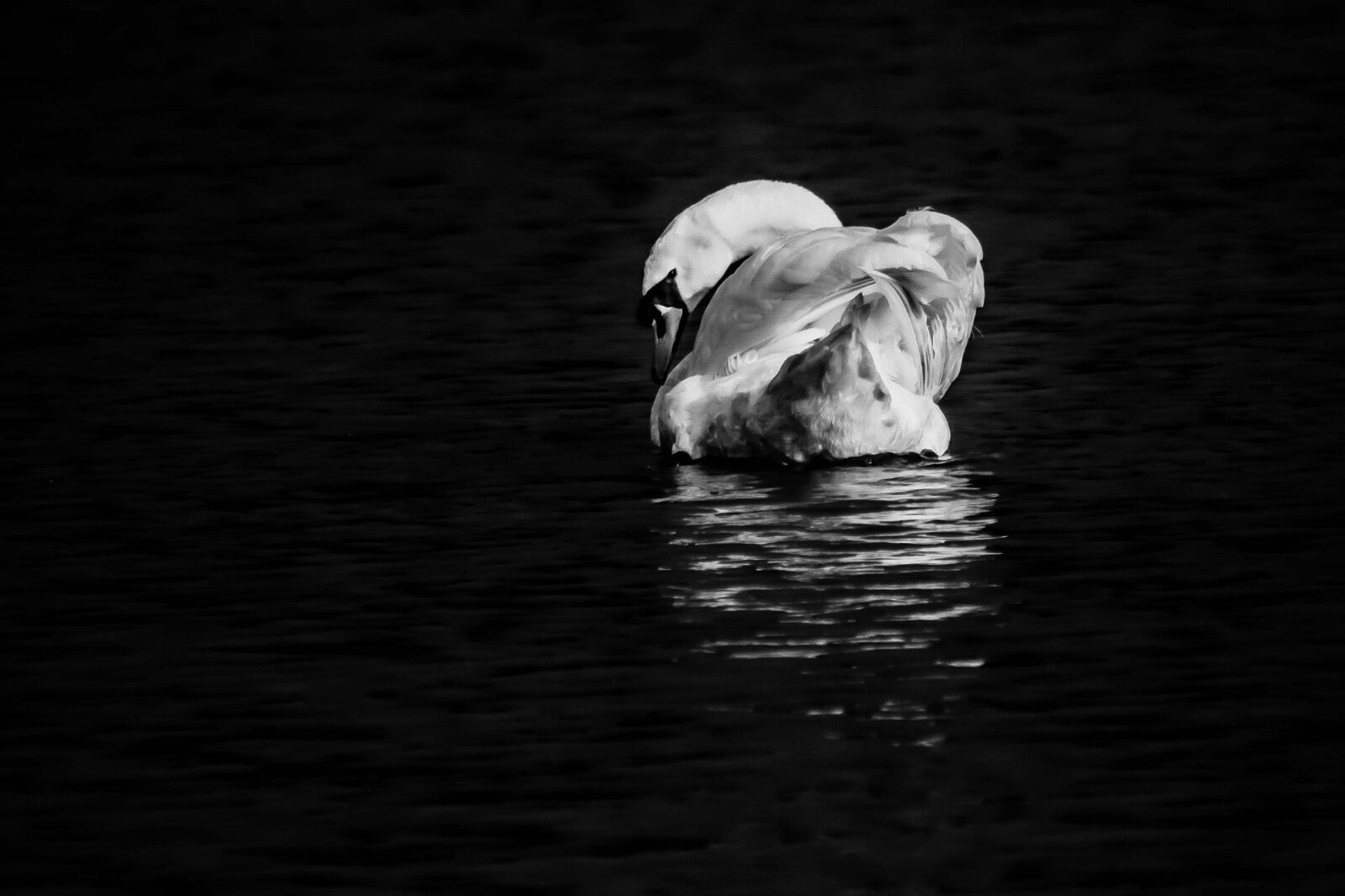 Swan-B&W-Stover-1-5
