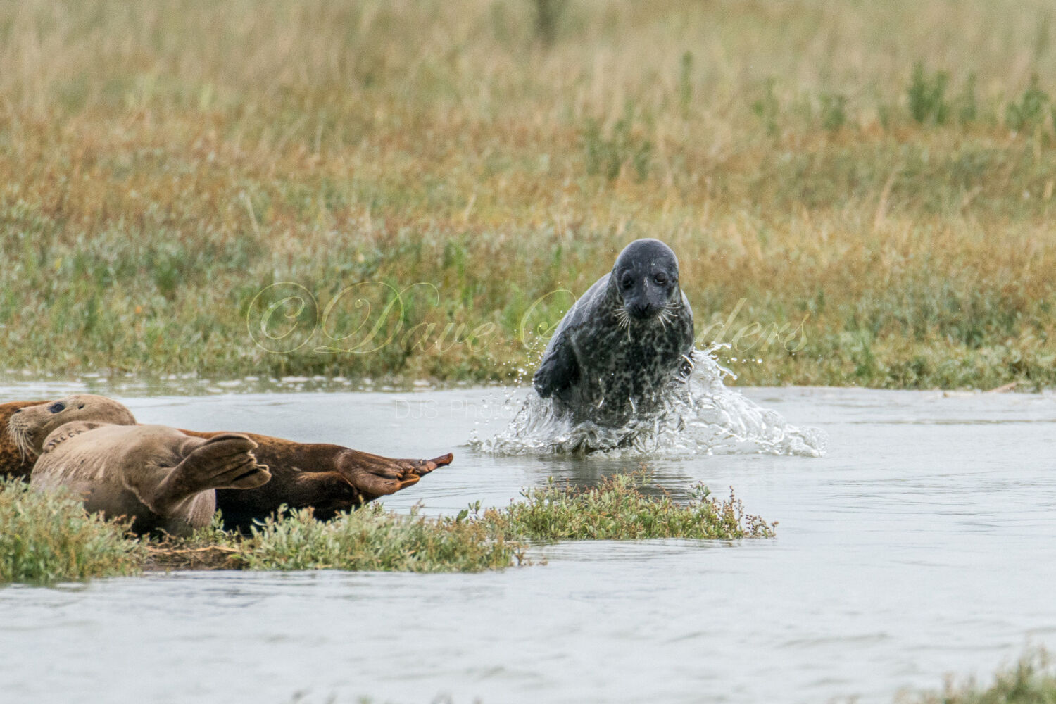 'Take off' Common Seal