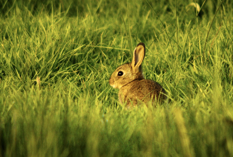 Rabbit Kit