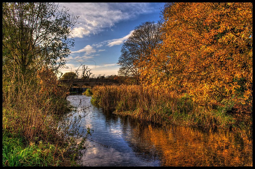River Cray in Autumn