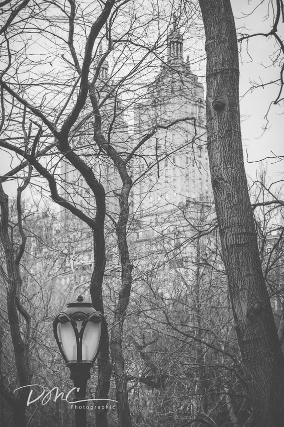 Cenrtral Park
