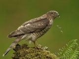 Other Birds of Prey