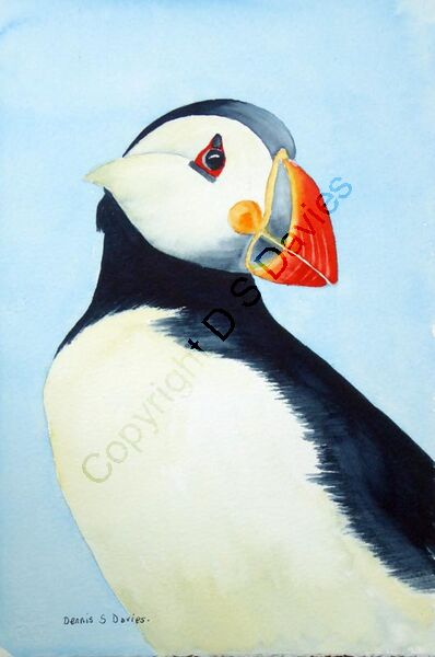 Puffin Hard (Currently in Exhibition)