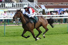 Olly The Brave (Harry Skelton)