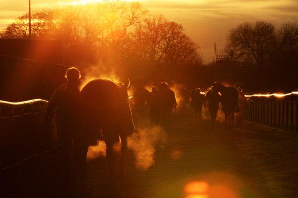 STEAMING SUNSET (winner - Injured Jockeys Fund calender )