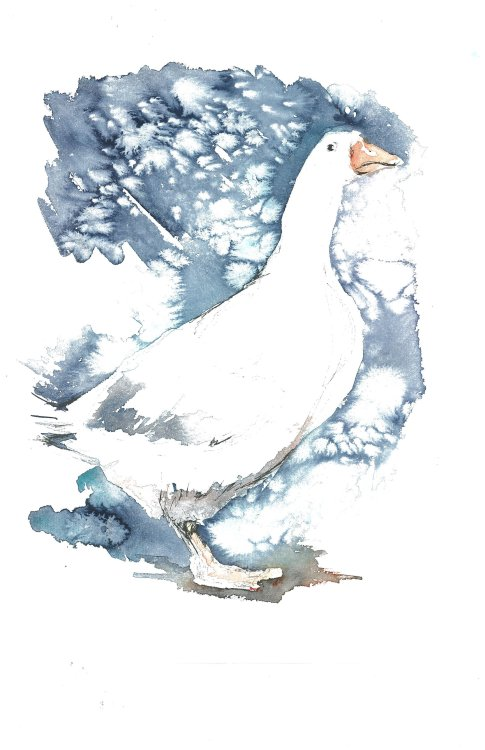 Snow Goose (SOLD)