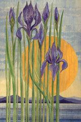 158 Purple Iris
