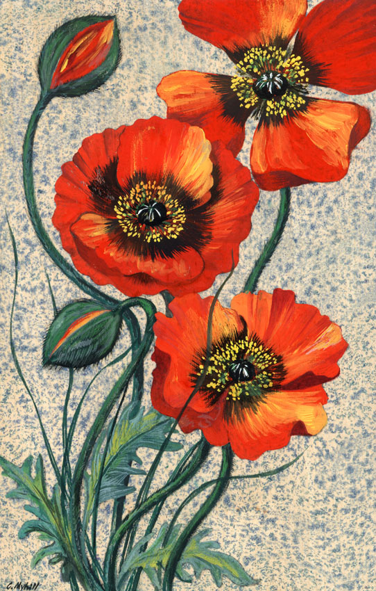 65 Poppies