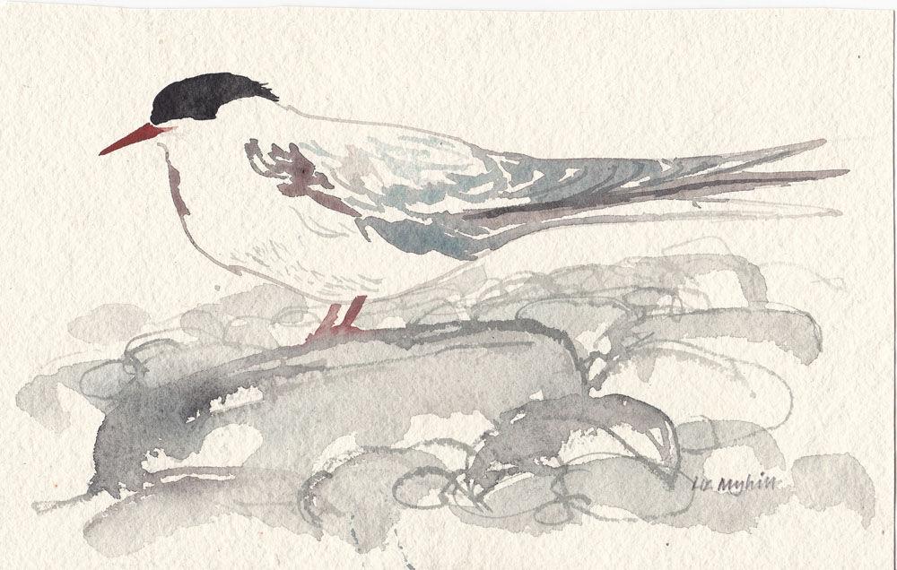 Dandelion Designs - Liz Myhill: Arctic Tern £250