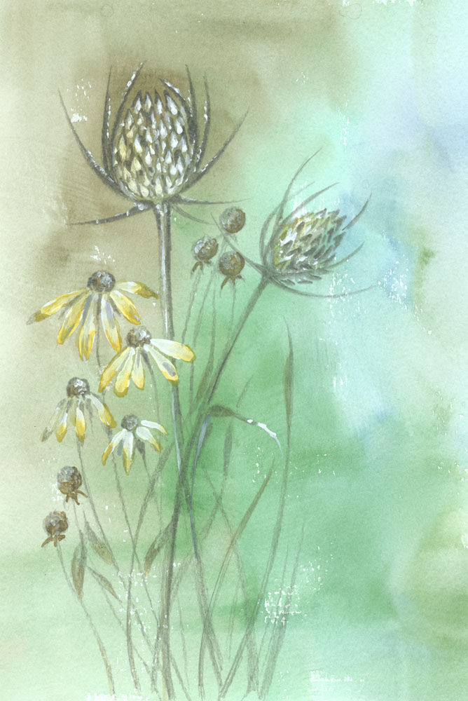 Dandelion Designs:- Cathy Myhilll - Teasels and Daisies