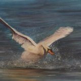 Swan (sold)