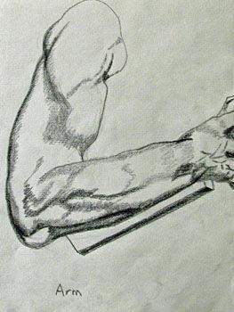 Plate 24. charcoal pencil, 24cm x  30.5cm