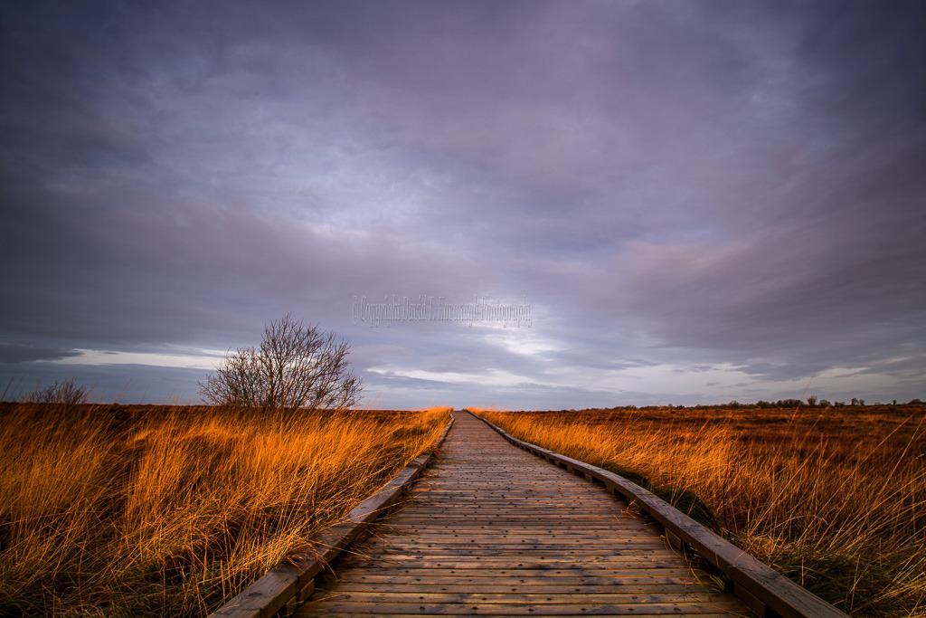 1003-Clara Bog Offaly boardwalk purple sky