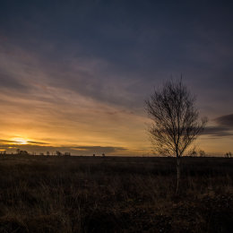 1018-Clara Bog Offaly blue sunrise