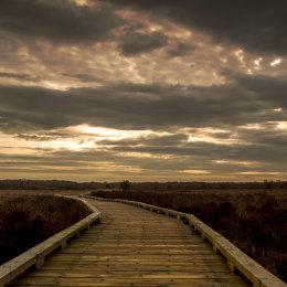 1025-Clara Bog Offaly Boardwalk looking east