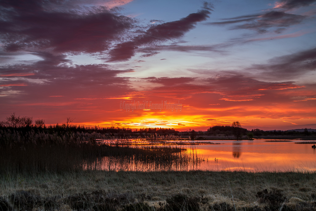 1078-Golden April sunrise over Tumduff Lough Boora Parklands Offaly Ireland