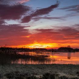 1078-Golden April sunrise over Tumduff Lough Boora Parklands Offaly Ireland