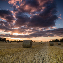 1124-September evening harvest Offaly Ireland20140920