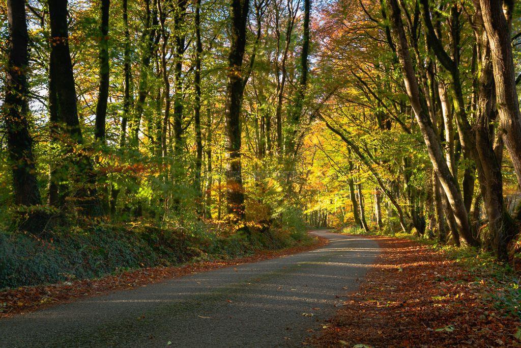 1129-Autumn Lane