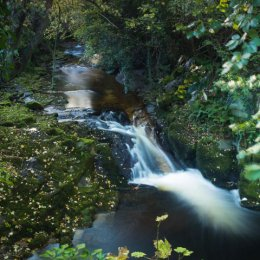 1135-Silver River Cadamstown Offaly Ireland