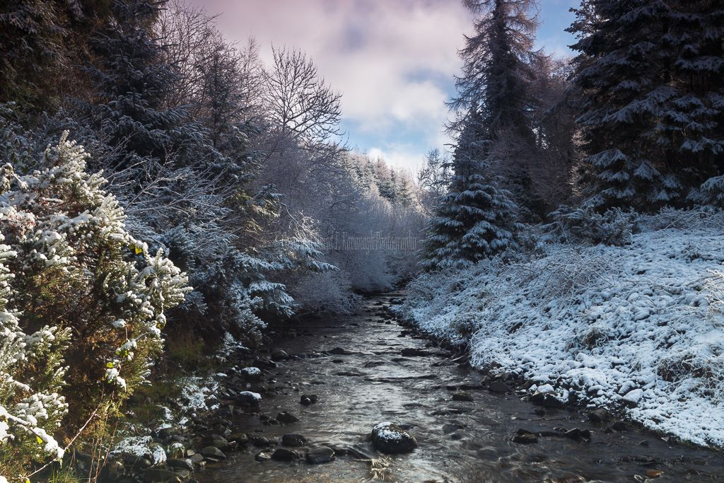 1155 Glenregan Winter Slieve Bloom Mountains Offaly